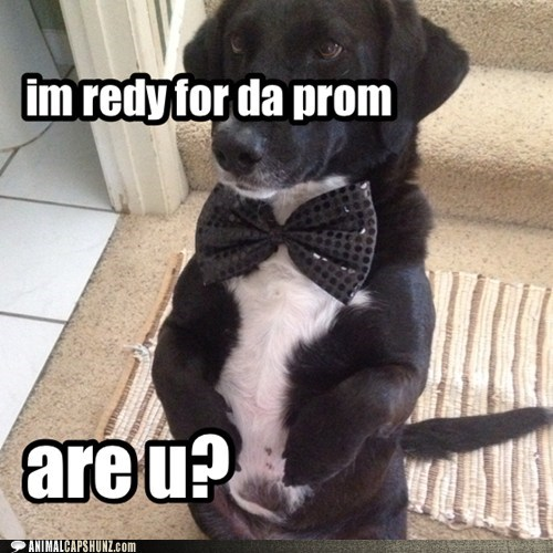 bow tie handsome prom - 7330057728