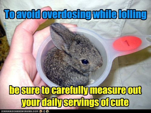measure cute bunny squee - 7330341120