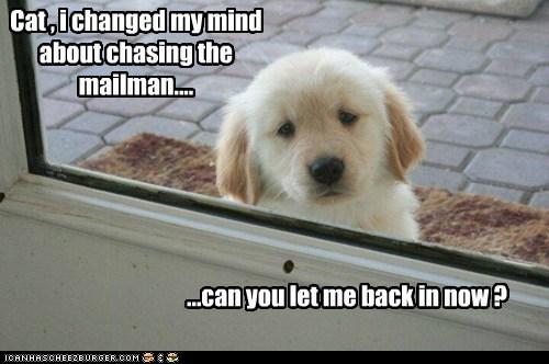 cat,mailman