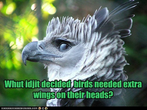 Whut idjit decided birds needed extra wings on their heads?