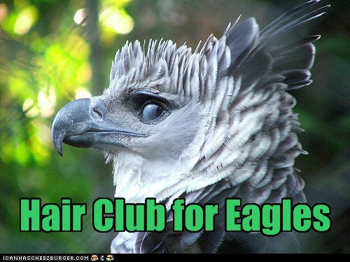 eagle,hair club for men