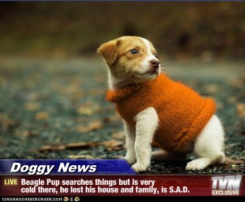 Doggy News - Beagle Pup searches things but is very cold there, he lost his house and family, is S.A.D.