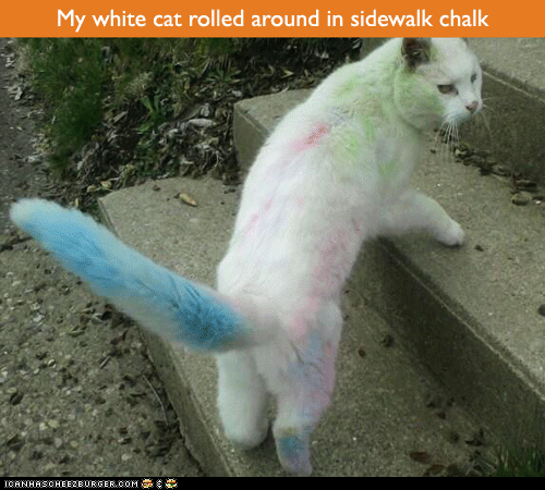 Nyan Cat chalk - 7335351808