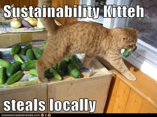 sustainable,stealing,Cats