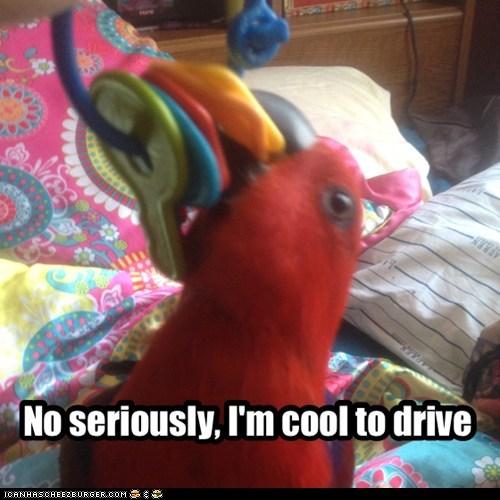 keys drink and drive bird - 7336332544