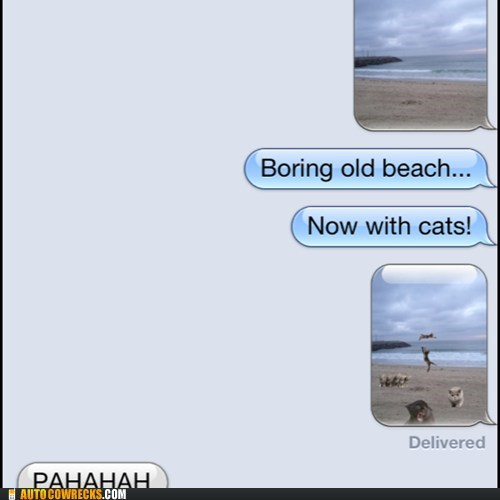 Cats,boring,beach,iPhones,g rated,AutocoWrecks