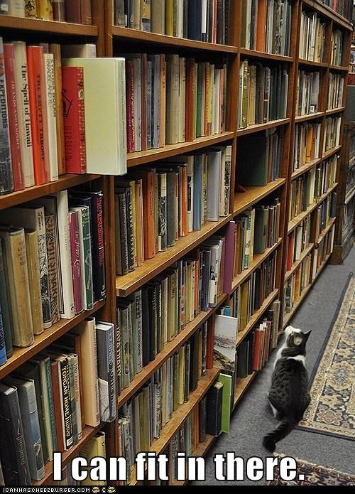 fit,bookshelves