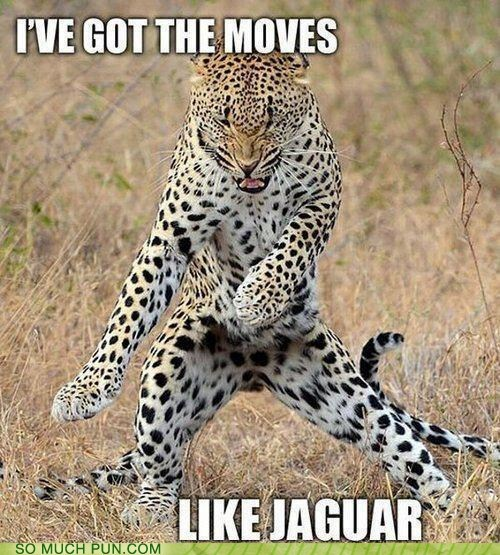 cat,jaguar,moves,mcjagger