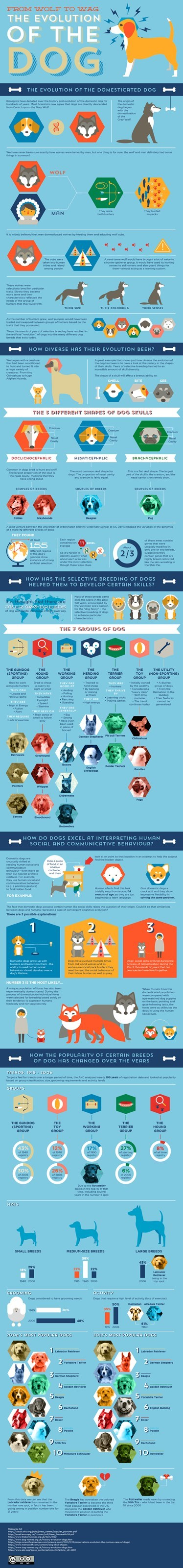 evolution infographics dogs wolf