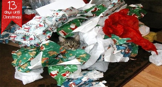 wrapping paper christmas gifts presents funny cats cat photos Cats - 7339013