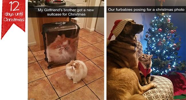 christmas dogs animal snapchats Cats snapchats - 7339525