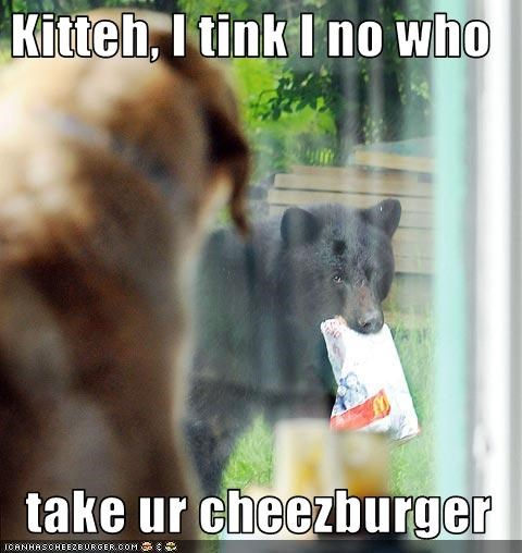Cheezburger Image 733992192