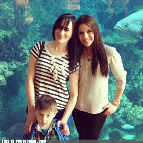 aquarium fish - 7339940352