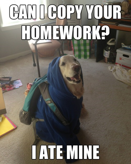 homework,excuse,school,dogs