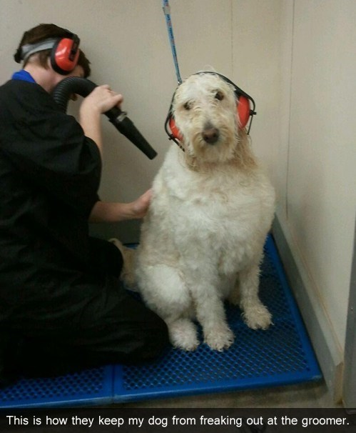 groomer dog logic dogs - 7340143104
