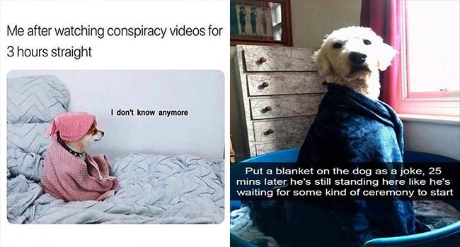 dogs dog memes funny memes Memes doggo funny dogs doggo memes funny - 7340293