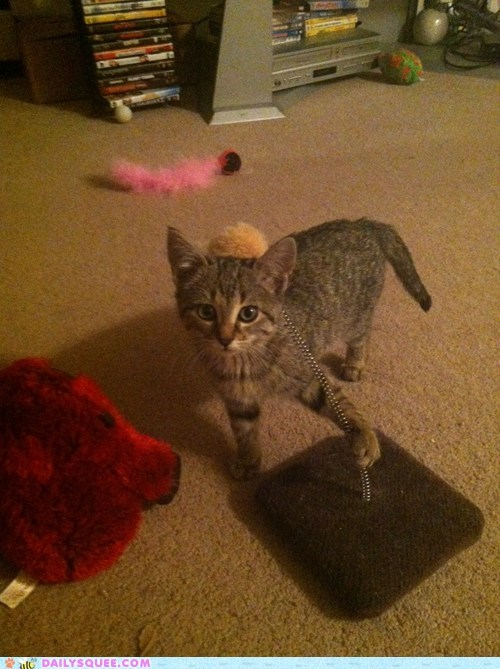 hat kitty toy