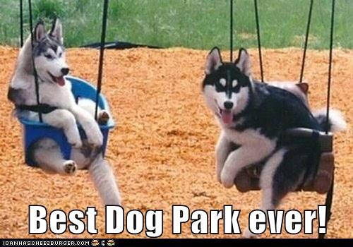 dog park,swings