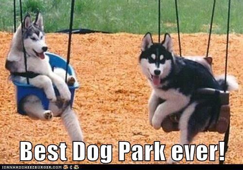 dog park swings - 7340669184