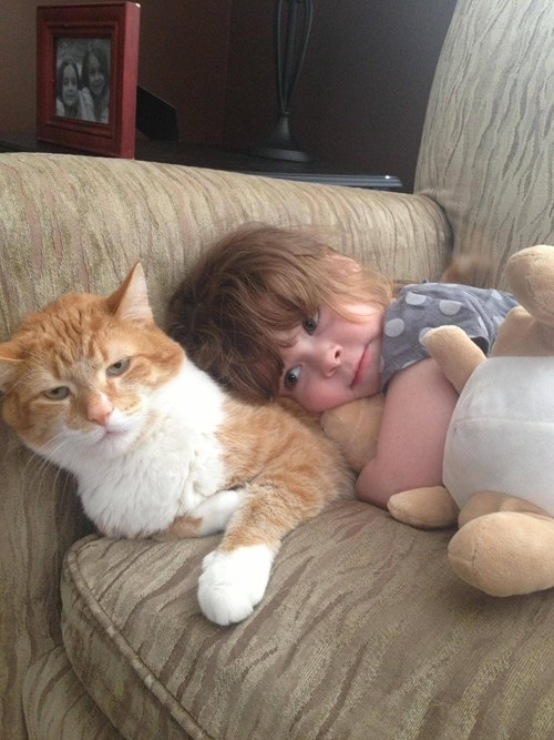 irritated cat,Grumpy Cat,annoying kids