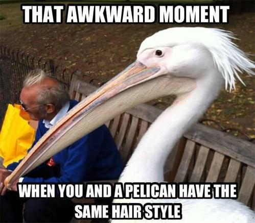 hair,pelican