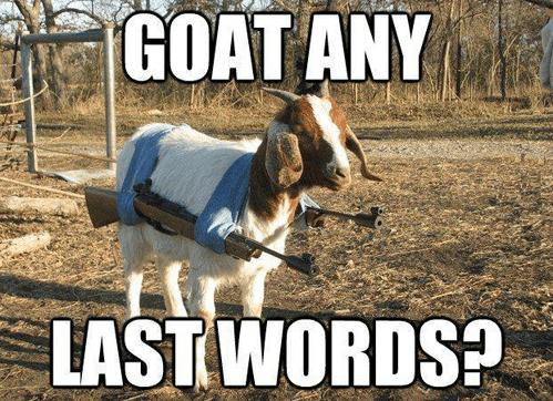 guns,goat