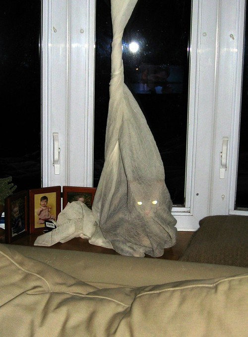 wtf monster curtains Cats - 7340748032