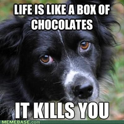 quotes dogs chocolate classic - 7340887808