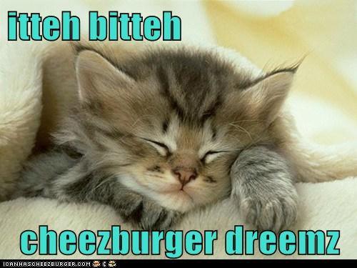 Cheezburger Image 7340892928