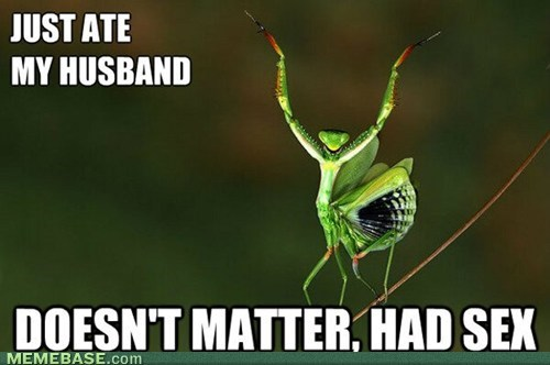 doesnt matter had sex,praying mantis