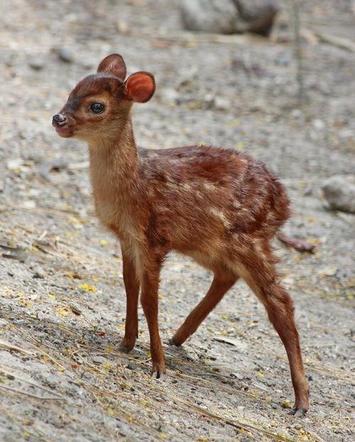 deer little - 7341037824