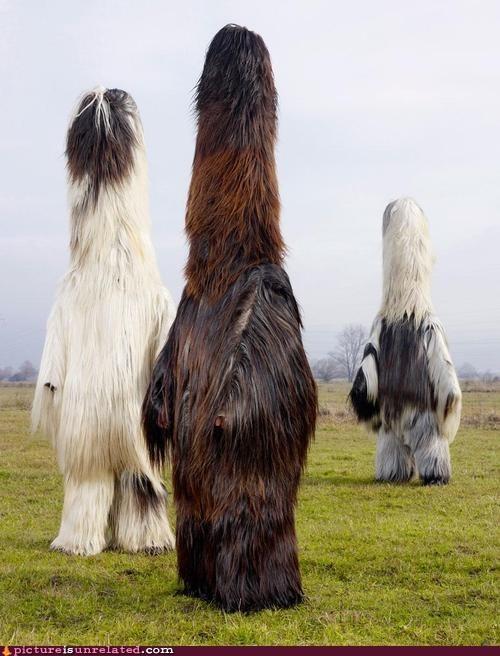 wtf easter island costume mutants Wookies - 7341171456
