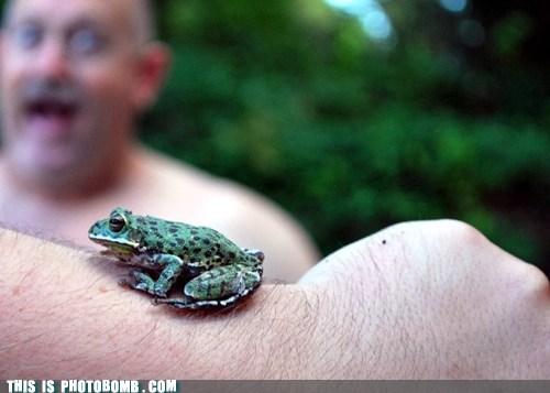 animals frog - 7341687296