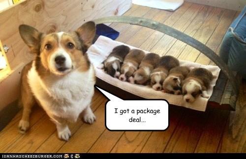 puppies cute corgi - 7341797888