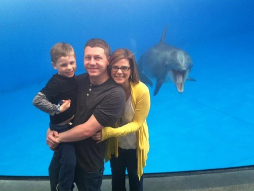 photobomb dolphin animals - 7341837312