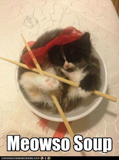 meow soup squee Cats - 7344475648