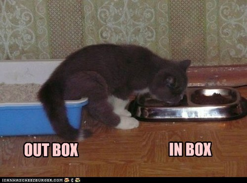 litter box,food