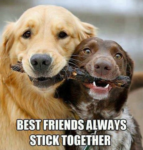 fetch share best friends dogs