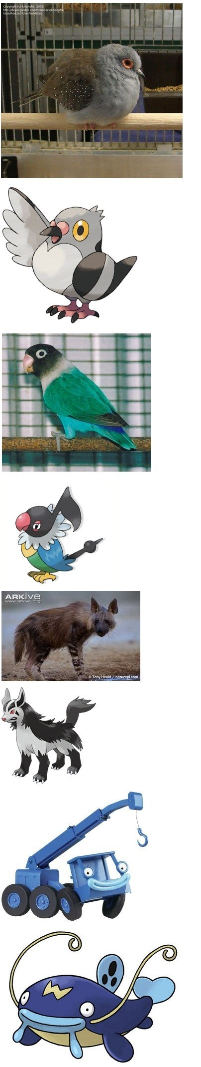 Pokémon whiscash IRL animals