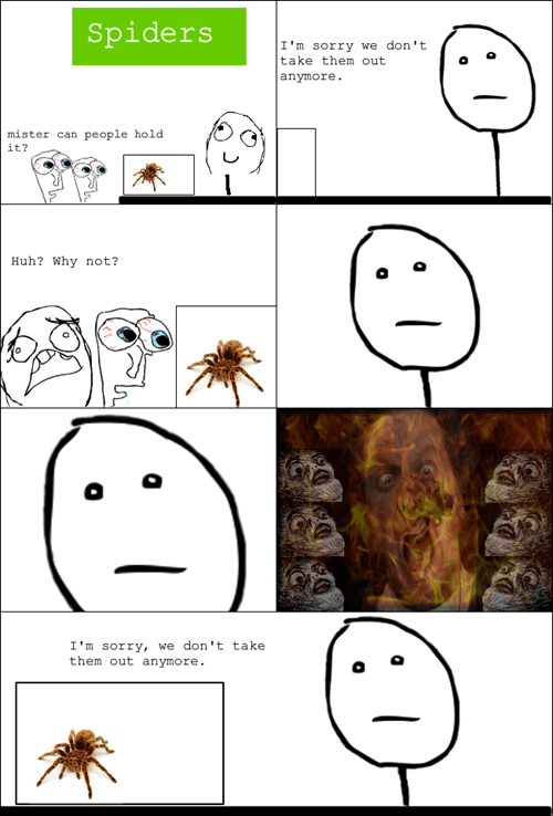 spiders,tarantulas,poker face