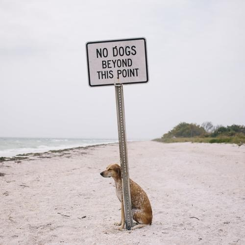 dogs at the beach beach no dogs beyond this point - 7346228992