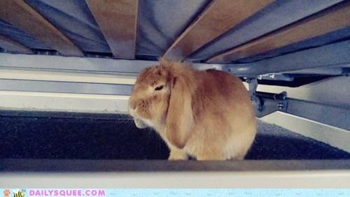 sleep rabbit - 7346534912