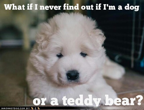 teddy bear,puppy,confused