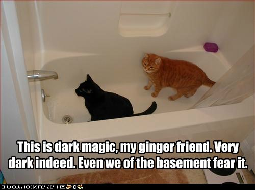 basement cat water bath - 7346692096