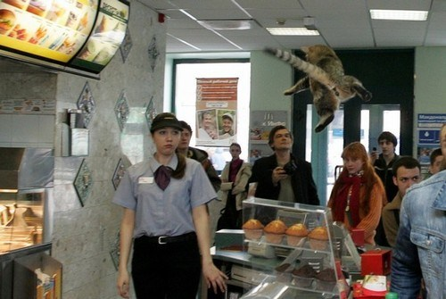 cat what fast food - 7347171840