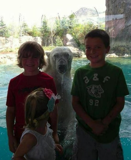 polar bear zoo animals - 7348503808