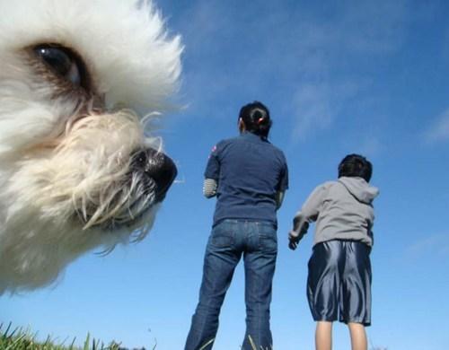 SOON park dogs - 7348506368