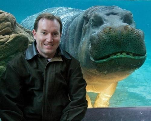 hippo animals - 7348506624
