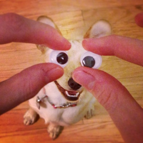 googly eyes dogs animals - 7348563200