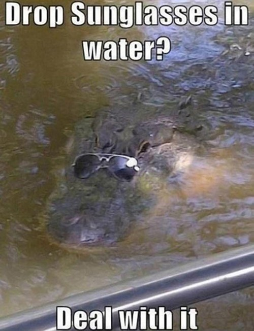 alligator shades Deal With It - 7348656640